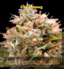 Humboldt Chemdawg Female 5 Marijuana seeds